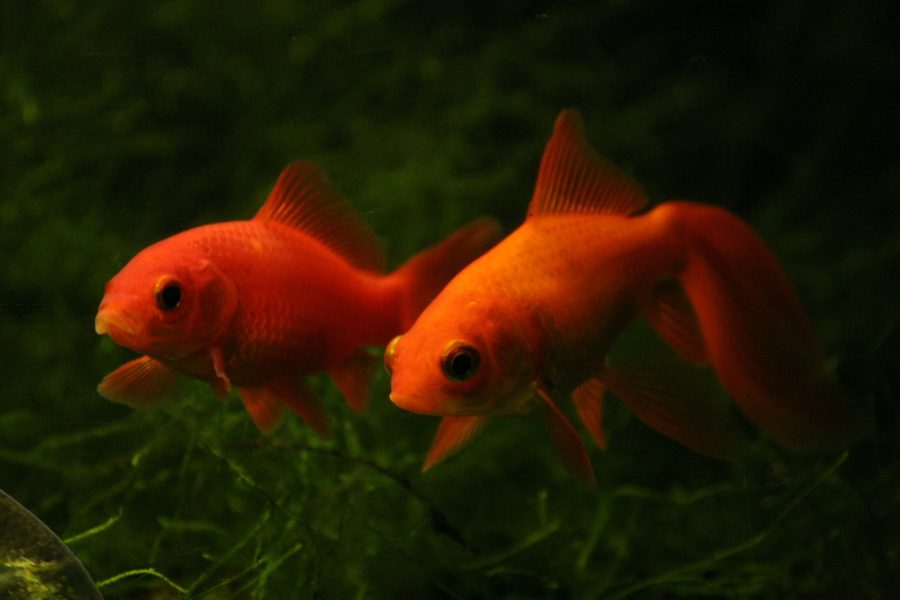 Urocza ryba